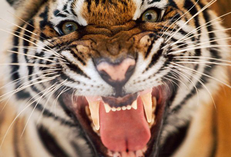 Is Conflict Always Negative (or Where is the Tiger)?